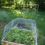 Guest Blogger: Square Foot Gardening